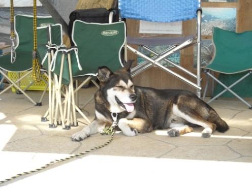 DSCN0340 座り込み犬・ポチ.JPG
